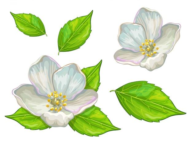 Blüten und blätter der scheinorange.