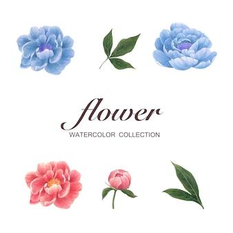 Blütenblumenelement-pfingstrosenaquarell auf weiß für dekorativen gebrauch.
