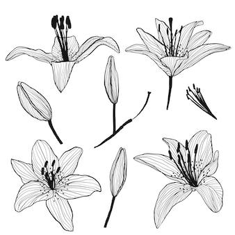 Blütenknospen und lilien