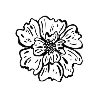 Blütenkopf. handgezeichnete vektor-illustration. monochrome schwarz-weiß-tintenskizze. strichzeichnungen. isoliert auf weißem hintergrund. malvorlagen.