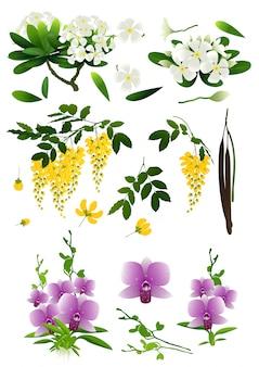 Blume getrennt auf weißem hintergrund