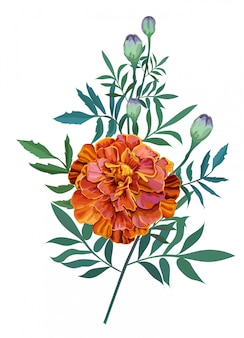 Blume orange, französische ringelblume