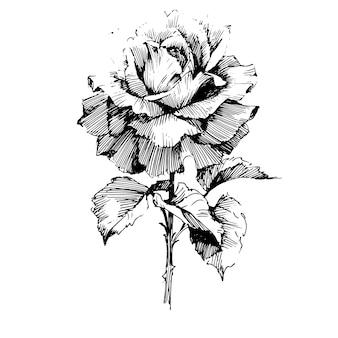Blumen botanische blume. isolierte illustration