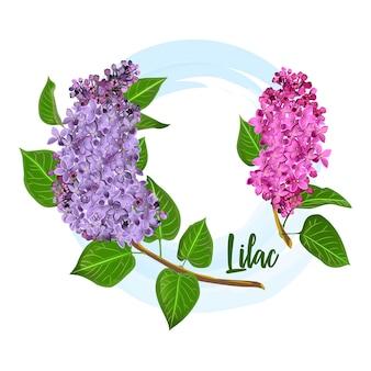 Blumen des dekorativen fliederbuschs