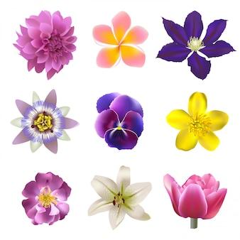 Blumen gesetzt