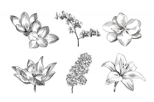 Blumen handgezeichnete skizzen, illustration