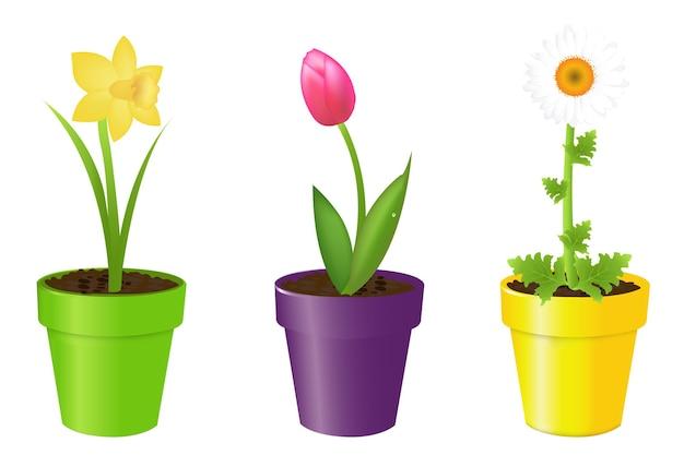 Blumen in töpfen tulpe narzisse und kamille isoliert