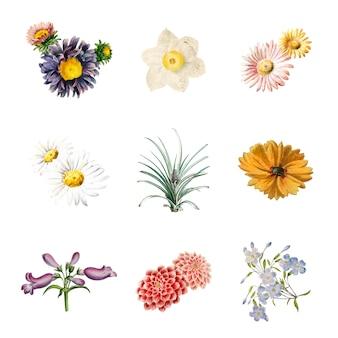 Blumen in voller blüte