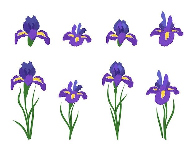 Blumen iris pflanzen mit blättern festliche dekorationen und elemente