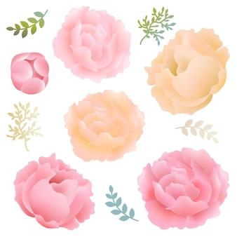Blumen pfingstrosen set