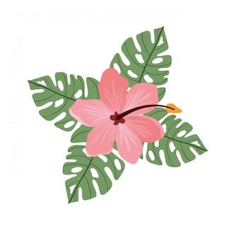 Blumen und blätter des sommers