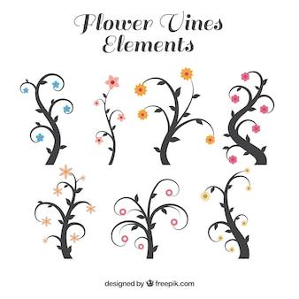 Blumen weinberge