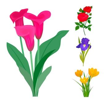 Blumenblumenstraußdekorationsnaturdesignblumenblumenzeichnungsblattblüte botanisches frühlingsfrauengeschenk