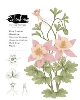 Blumenbotanik-sammlung skizzieren