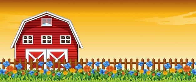 Blumenfarm in der sonnenuntergangshimmelszene mit scheunenhintergrund