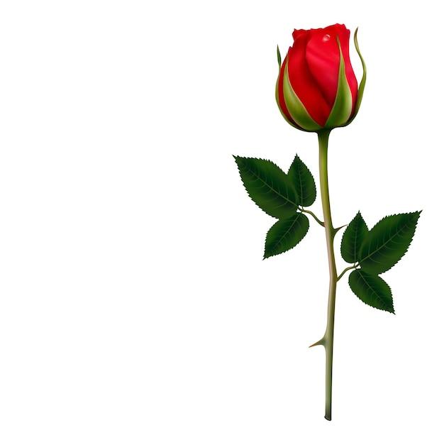 Blumenhintergrund mit einer schönen roten rose.
