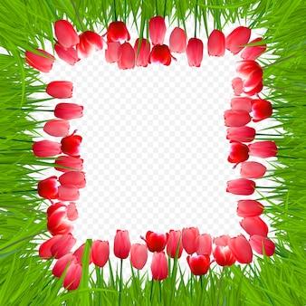 Blumenhintergrund mit tulpen auf transparentem hintergrund