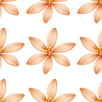 Blumenmuster, isoliert auf weiss