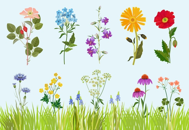 Blumensammlung. feldwiesenzeichnung der botanischen wildpflanzen im karikaturstil.