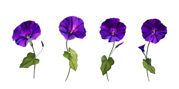 Blumensatz lila blumen bindekraut auf stielen mit grünen blättern.
