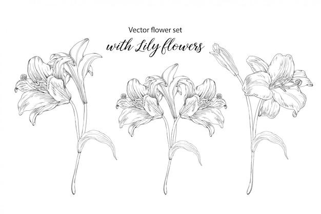 Blumensatz mit lilienblumen