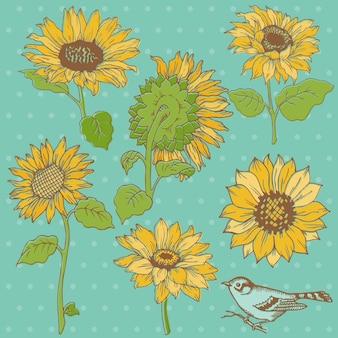 Blumenset detaillierte handgezeichnete sonnenblumen