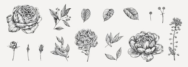 Blumenset sehr detaillierte handgezeichnete rosen.