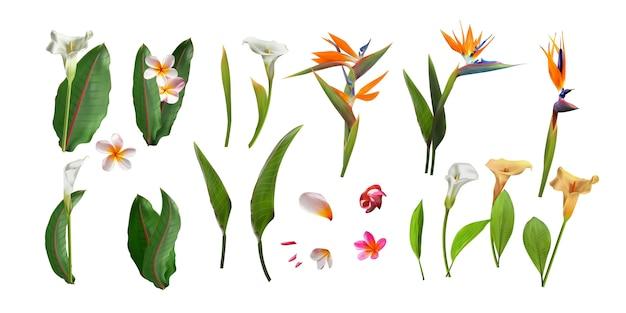 Blumenstrauß von blumen mit dem exotischen blatt lokalisiert auf weißem hintergrund.