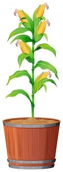Blumentopf mit grün verlässt auf einem lokalisierten weiß