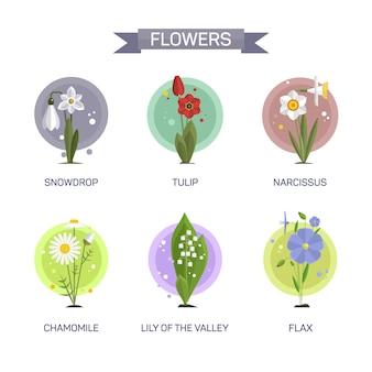 Blumenvektorsatz lokalisiert. illustration im flachen stil design. tulpe, kamille, schneeglöckchen, lilie, narzisse, flachs.