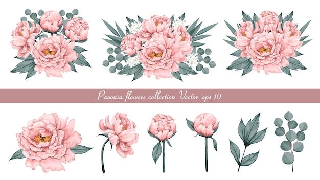 Blumenweinlese mit rosa paeonia blüht eukalyptusblätter