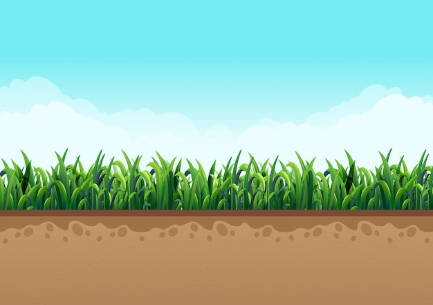 Boden mit grünem gras zusammen mit natur und himmel mit schönen wolken. vektorabbildungen