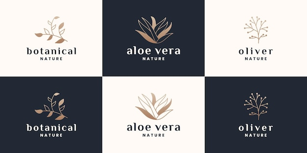 Botanik, aloe vera, olivfarbenes logo-design-set mit goldener farbe