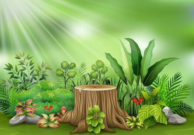 Botanische betriebsansicht auf sonnenlicht