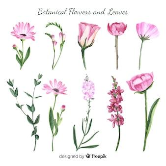 Botanische blumen und blätter des aquarells