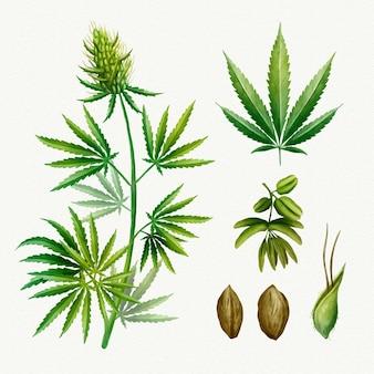 Botanische cannabisblätter packen