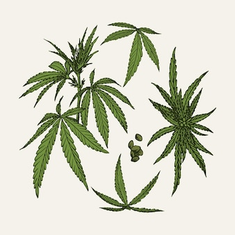 Botanische cannabisblätter Kostenlosen Vektoren