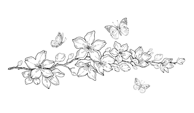 Botanische handzeichnung gekritzelillustration der kirschblütenblüte Premium Vektoren