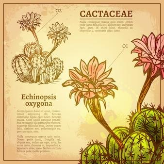Botanische illustration des kaktus
