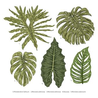 Botanische illustration des weinlesevektors