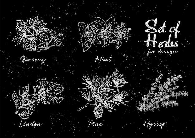 Botanische illustrationen eingestellt