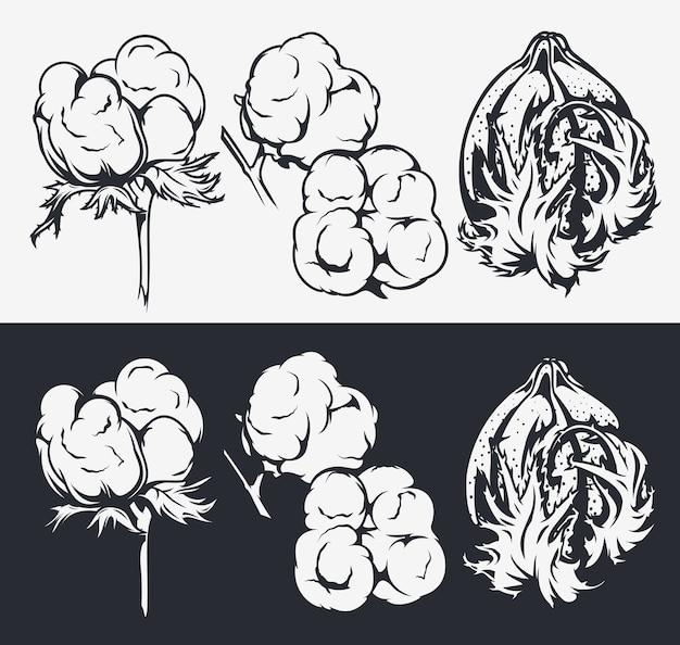 Botanische illustrationen gesetzt. baumwollblumen. elemente für design, dekoration.