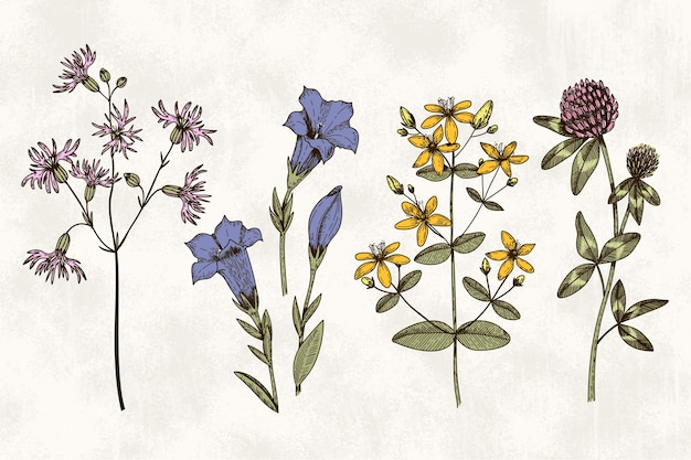 Botanische kräuter & wildblumen im retro-stil