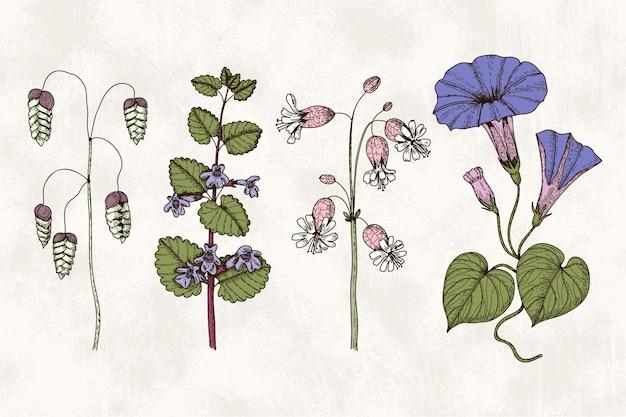 Botanische kräuter & wildblumen im vintage-stil