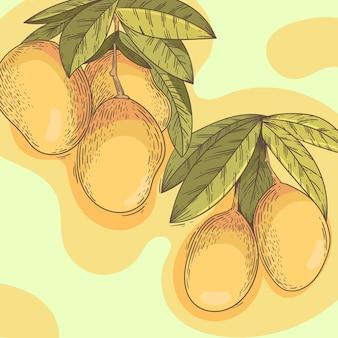 Botanische mangobaumfrüchte