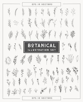 Botanische minimalpflanzen und blumen gesetzt. einfache illustrationen handgezeichnet im strichkunststil. isolierte elemente für grafikdesign, transparente cliparts für ihre kreativität.