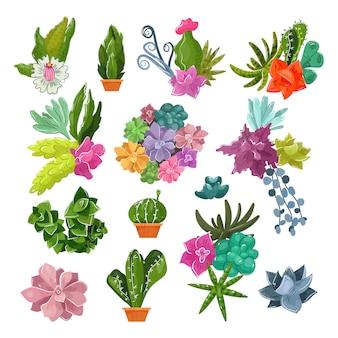 Botanische topfkakteen der kaktuskarikatur mit tropischen blumen und blühendem kaktus saftiger pflanzenbotanikillustrationssatz des blumentopfs für hauptinnendekor lokalisiert auf weißem hintergrund