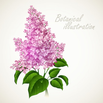 Botanische vektorillustration.