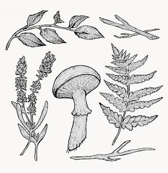 Botanische vintage waldpflanzen gesetzt. schöne illustrationen handgezeichnet im punktierstil. isolierte elemente für grafikdesign, transparente cliparts für ihre kreativität.