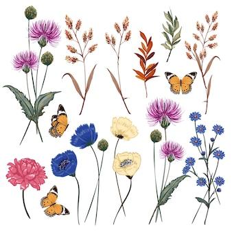 Botanische wiesenblumenvektorillustration